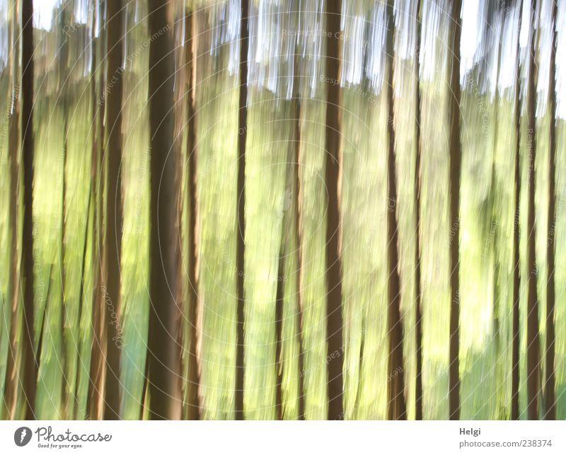 Traumwald für bellaluna... Himmel Natur grün Baum Pflanze Wald Umwelt Landschaft gelb Frühling Bewegung Kunst braun außergewöhnlich natürlich frisch