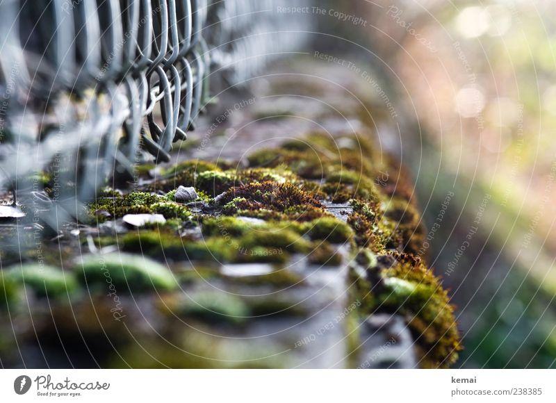 Ca. 200 Mooshügel Umwelt Natur Pflanze Grünpflanze Wildpflanze Gartenzaun Zaun grün Wildwuchs natürlich Farbfoto Gedeckte Farben Außenaufnahme Nahaufnahme