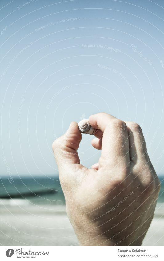 Strandgut für Bella Hand Meer Sommer Umwelt Küste klein maskulin Finger Schönes Wetter berühren Ostsee Muschel Wolkenloser Himmel finden Mensch