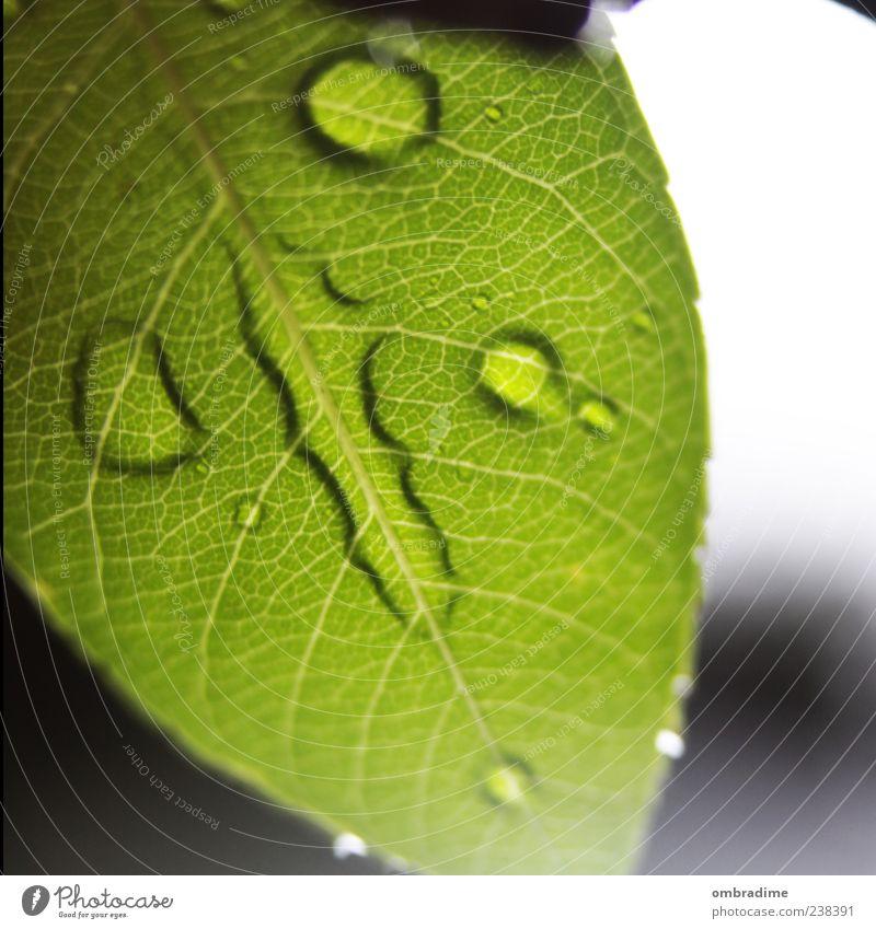 Wasserzeichen Umwelt Natur Pflanze Wassertropfen Frühling Sommer Regen Blatt Grünpflanze nass grün schön Strukturen & Formen Farbfoto Außenaufnahme Nahaufnahme