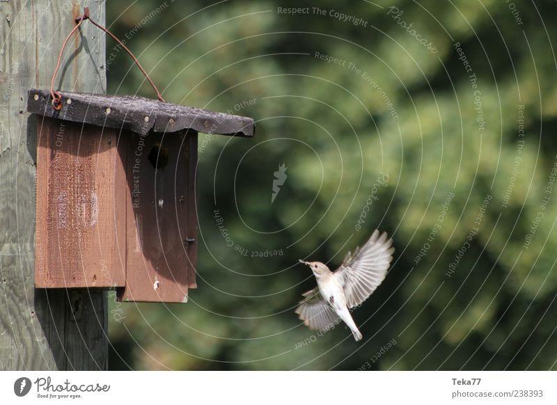 Fütterungszeit Natur Tier Umwelt Frühling Bewegung klein Vogel außergewöhnlich ästhetisch authentisch Flügel Schnabel füttern fliegend Futter Futterhäuschen