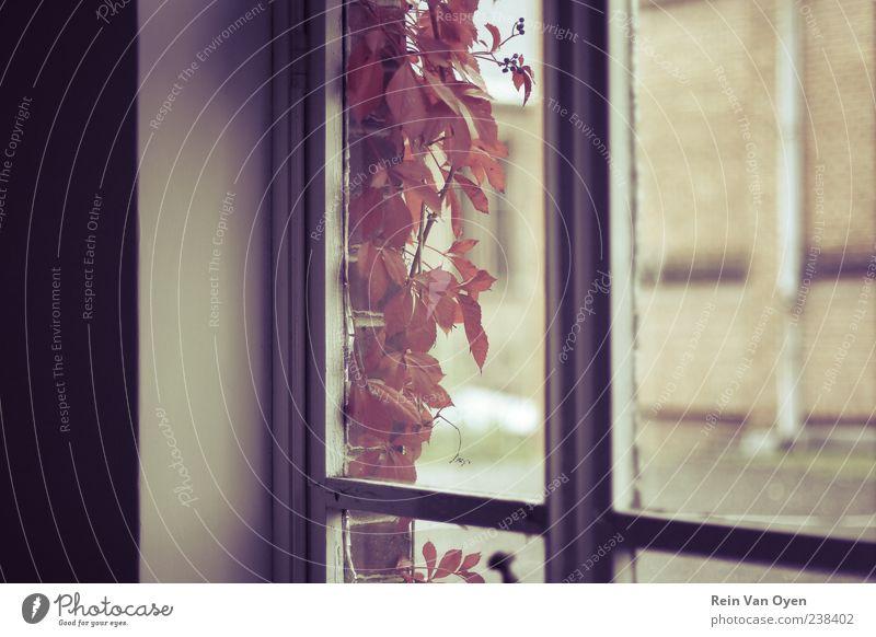 Pflanze schön rot Einsamkeit Blatt ruhig Haus Fenster Wand Mauer Holz Stein braun Horizont Glas retro