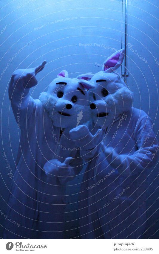 don't be the bunny 2 Tier blau Coolness Farbfoto Innenaufnahme Textfreiraum oben Nacht Kunstlicht Zentralperspektive Blick in die Kamera verkleidet verkleiden