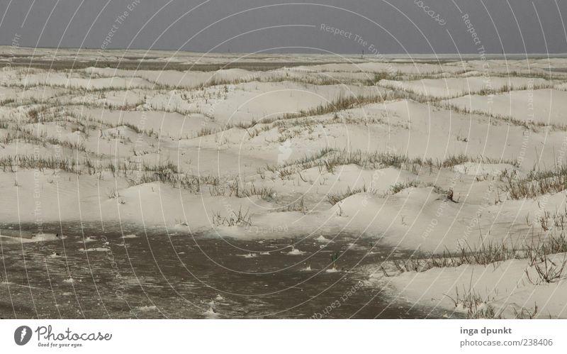Spiekeroog / Durch die Dünen Natur weiß Ferien & Urlaub & Reisen Pflanze Einsamkeit Erholung Umwelt Landschaft Gras Sand braun Erde Zufriedenheit Klima Insel