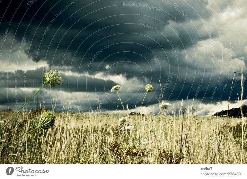 dem Regen entgegen Landschaft Himmel Gewitterwolken Gras Grünpflanze Feld trocken grau grün Endzeitstimmung ruhig Sturm Außenaufnahme Menschenleer Tag