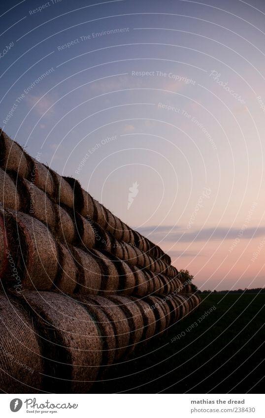 STROHBALLEN Umwelt Natur Landschaft Pflanze Himmel Wolken Horizont Sommer Schönes Wetter Wiese ästhetisch schön Strohballen Farbfoto mehrfarbig Außenaufnahme