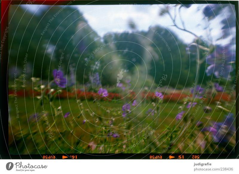 Im Park Natur Pflanze Sommer Blume Umwelt Wiese Gras Garten Park Stimmung Wachstum Blühend