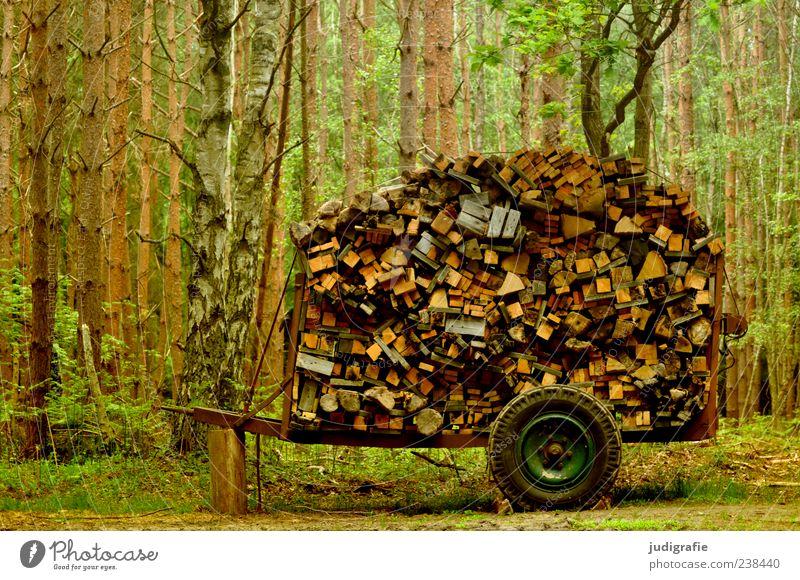 1500 | 'ne Menge Holz Umwelt Natur Landschaft Pflanze Baum Wald Anhänger viele Brennstoff Holzbrett Wagen Stapel Sammlung Brennholz Farbfoto Außenaufnahme