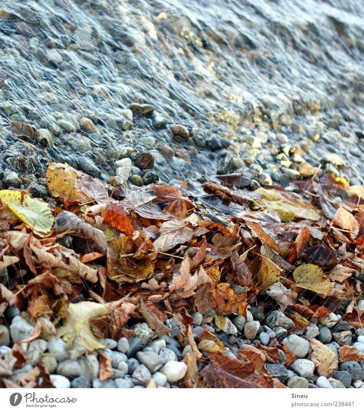 Ufer im Herbst Natur Wasser Blatt ruhig Herbst Bewegung natürlich Vergänglichkeit rein Flussufer Herbstlaub Wasseroberfläche fließen Kieselsteine Stein Fluss