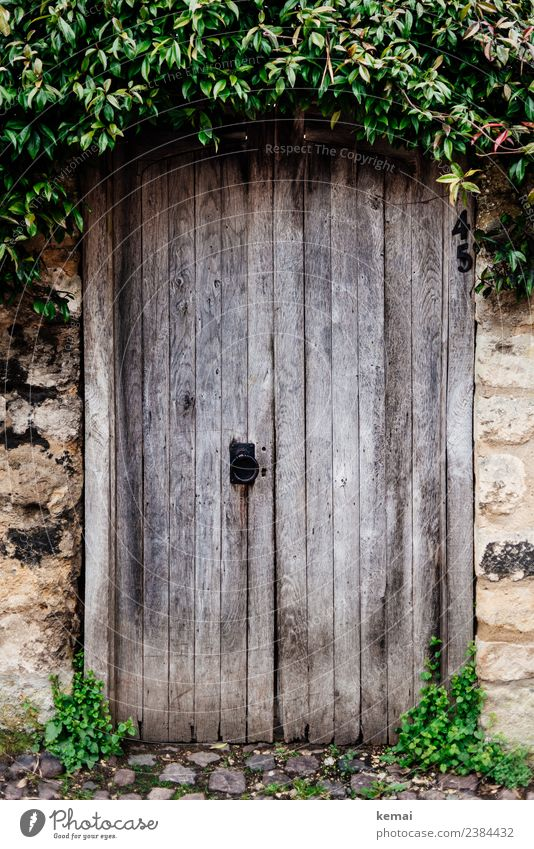Verschlossene Tür mit Haube harmonisch ruhig Ausflug Städtereise Pflanze Sträucher Grünpflanze Dorf Kleinstadt Altstadt Mauer Wand Holztür Pflastersteine