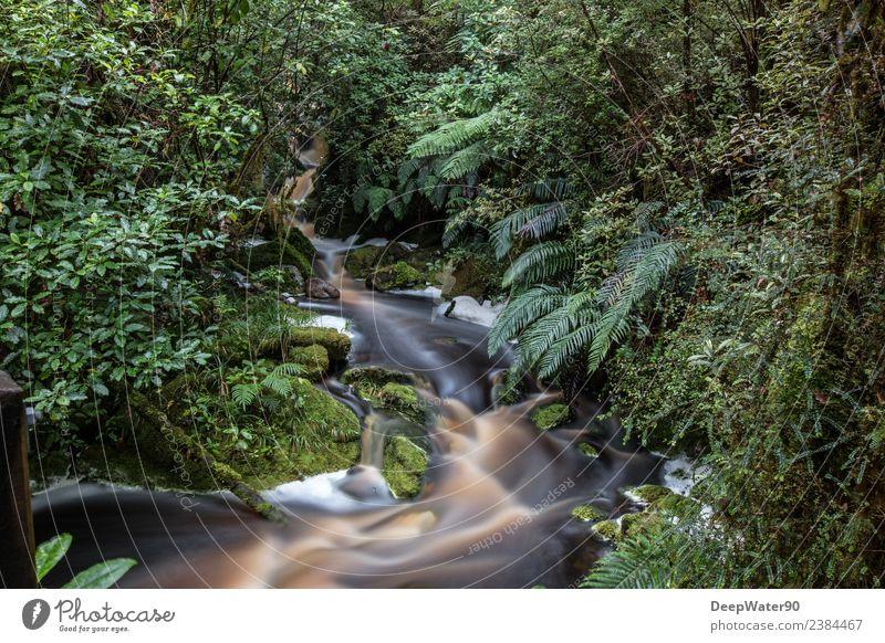 Mittendrin Umwelt Natur Pflanze Urelemente Erde Wasser Sommer Baum Sträucher Moos Blatt Grünpflanze Wildpflanze Urwald Felsen Schlucht Bach Wasserfall