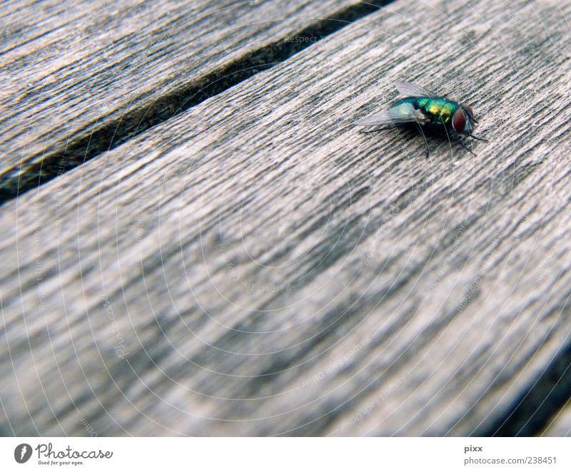 Puck grün Tier ruhig Leben Holz Freiheit braun gehen gold glänzend fliegen warten außergewöhnlich laufen sitzen Fliege