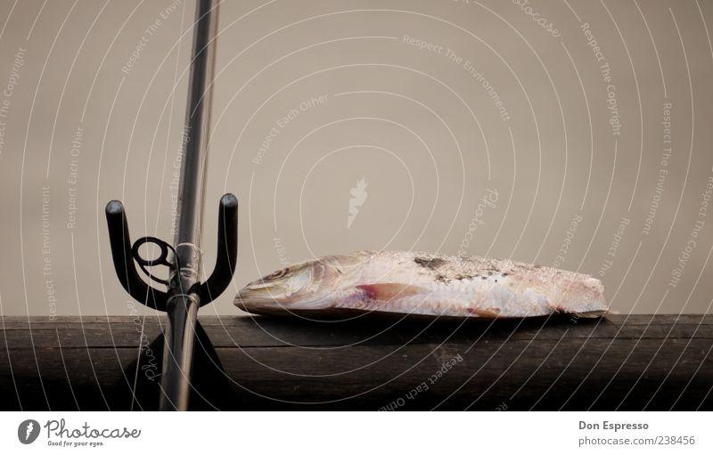 Erwischt. Fisch Meeresfrüchte Freizeit & Hobby Angeln Totes Tier 1 fangen Jagd ästhetisch Ende Vergänglichkeit Tod Angelrute Schwanzflosse gefangen Schuppen