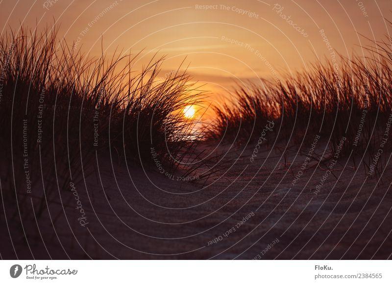 Feuerball in den Dünen Ferien & Urlaub & Reisen Ferne Umwelt Natur Landschaft Urelemente Erde Sand Himmel Sonnenaufgang Sonnenuntergang Schönes Wetter Küste