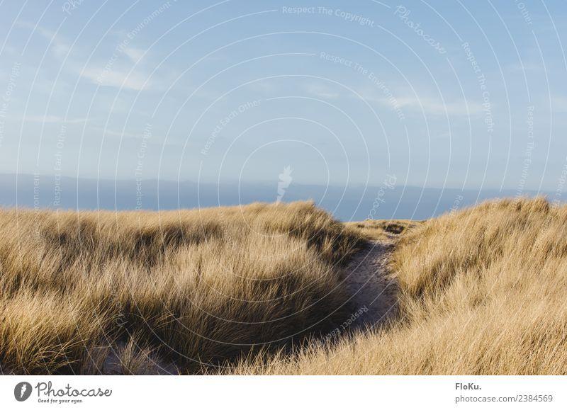 Blonde Küste Ferien & Urlaub & Reisen Ferne Freiheit Sommerurlaub Sonne Strand Meer Umwelt Natur Landschaft Sand Luft Himmel Herbst Schönes Wetter Gras Nordsee
