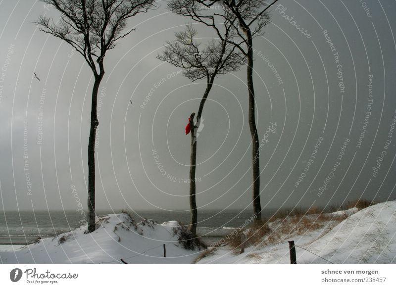 wintertags Schnee Küste Ostsee Baum Sand Strand Darß Wind Vogel Möwe grau Himmel Schneeflocke Regen dunkel Nebel bedeckt Meer Ferne Horizont Winter Wetter