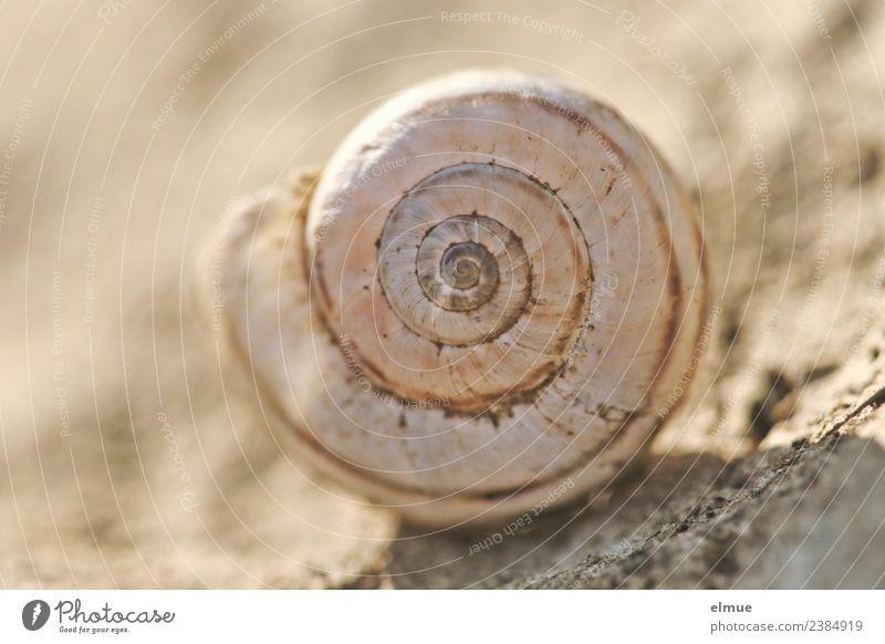 Schneckenhaus rechtsdrehend Spirale Kalkschale Verpackung Dekoration & Verzierung Stein Zeichen Ornament Linie Netzwerk fest rund Romantik Beginn ästhetisch