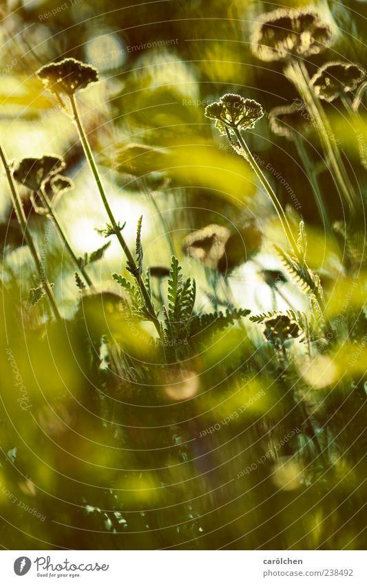 walk on the green side Natur grün Pflanze Blume Garten Wachstum Blumenwiese natürliche Farbe