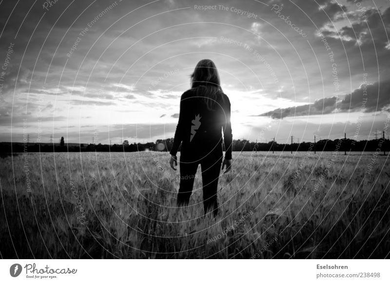 Half Remembered Dream Freiheit Sonne Mensch feminin Frau Erwachsene 1 Natur Landschaft Himmel Sonnenaufgang Sonnenuntergang Sommer Schönes Wetter Feld Wald