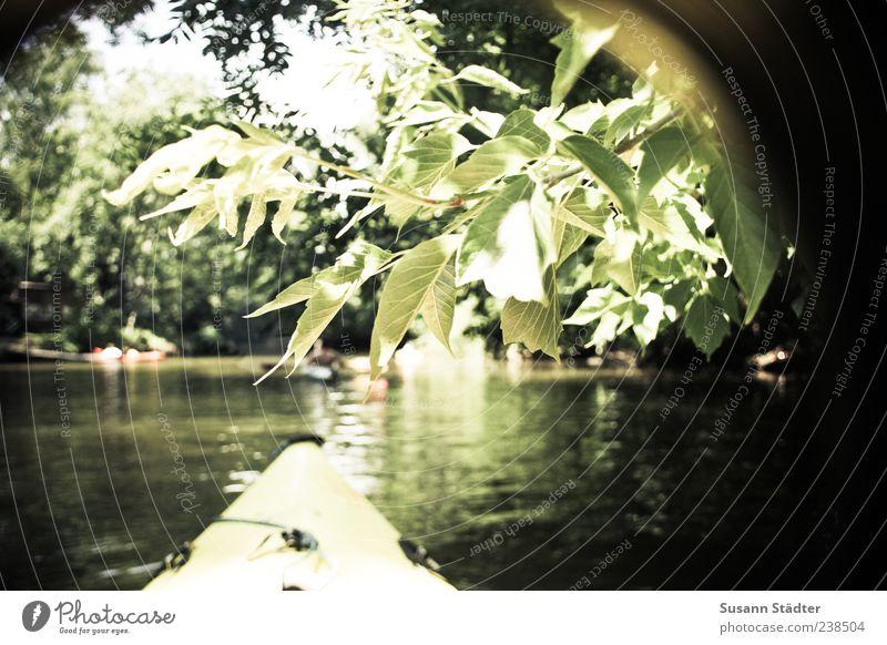 LE aus dem Kajak Natur Ferien & Urlaub & Reisen Pflanze Sommer Blatt Leben Wasserfahrzeug Schwimmen & Baden Wellen Freizeit & Hobby Leipzig Zweig Expedition