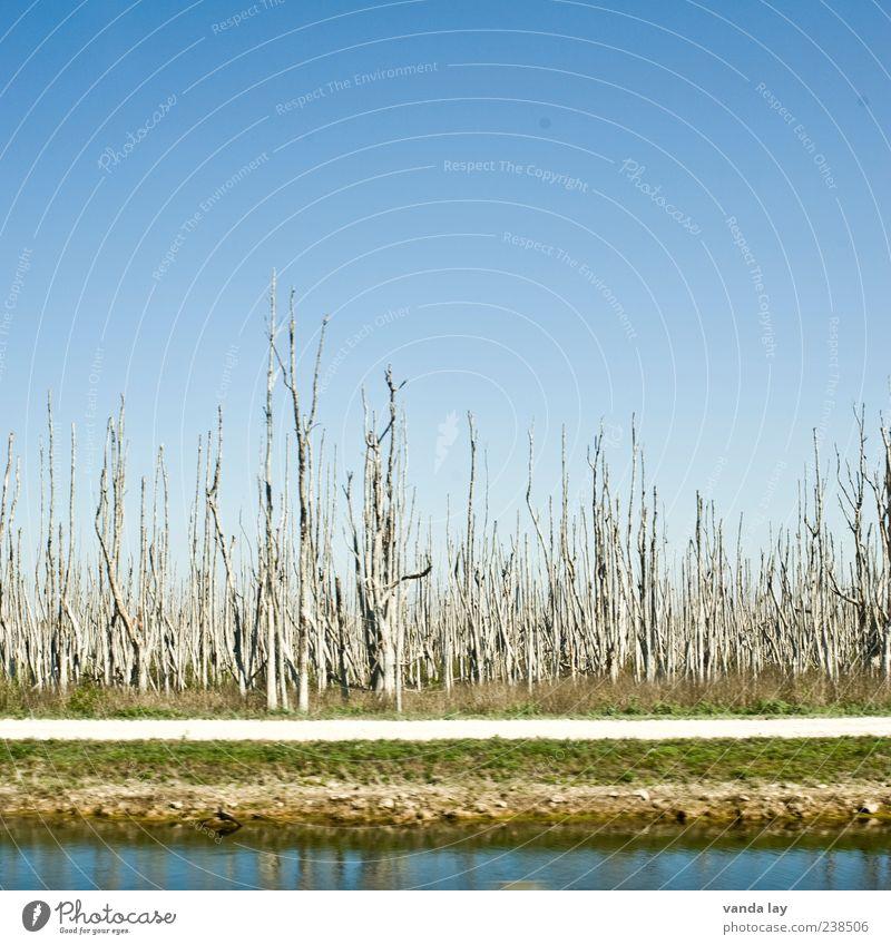 Everglades Wasser Baum Pflanze Umwelt Holz Gras Wege & Pfade Vergänglichkeit USA Fluss Schönes Wetter Verfall Baumstamm Symmetrie Blauer Himmel Durst
