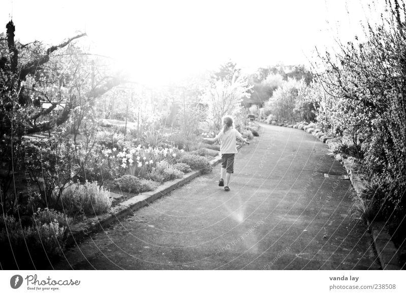 Unbeschwert Mensch Kind Mädchen 1 3-8 Jahre Kindheit Umwelt Natur Pflanze Frühling Sommer Schönes Wetter Baum Blume Gras Sträucher laufen frei Wärme