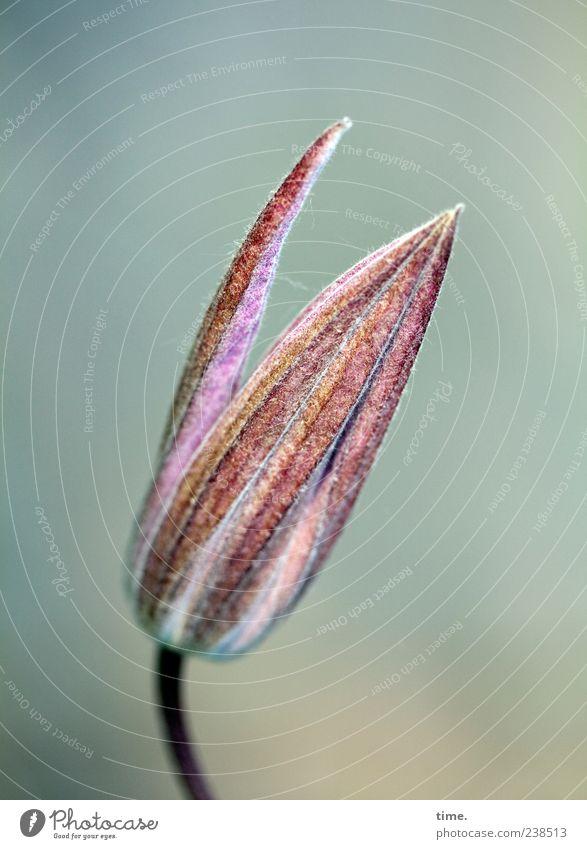 Gute Nacht, schöner Tag Pflanze rot Blatt Farbe oben Glück Blüte rosa elegant frei ästhetisch Wandel & Veränderung Hoffnung Spitze rein