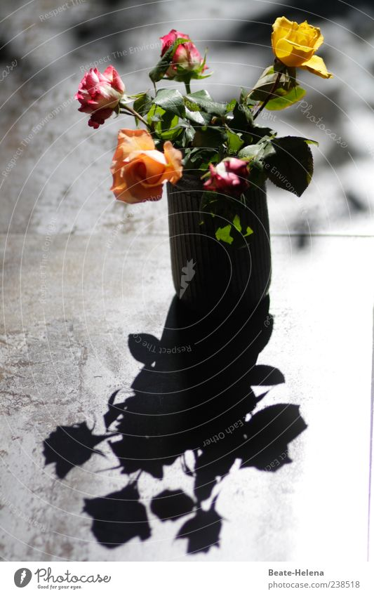Danke für die Blumen! Rose schön gelb rot Freude Glück Fröhlichkeit Rosenblüte Blumenstrauß Schatten Freudenspender Rosenstrauß Farbfoto Innenaufnahme