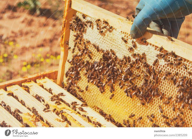 Imker und seine Bienen Lebensmittel Honig Honigbiene Bienenwaben Ernährung Lifestyle Design Arbeit & Erwerbstätigkeit Beruf Landwirtschaft Forstwirtschaft