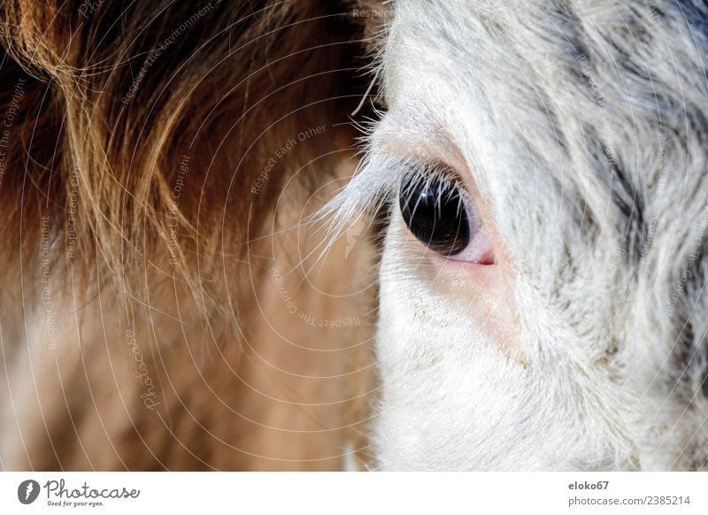 bulls eye Natur rosa Baby Großgrundbesitz Malediven Ranch London Eye