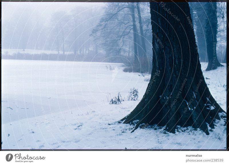 Echt Trist II Ausflug Winter Umwelt Natur Landschaft Pflanze Klima Klimawandel Wetter schlechtes Wetter Nebel Eis Frost Schnee Baum Park beobachten genießen
