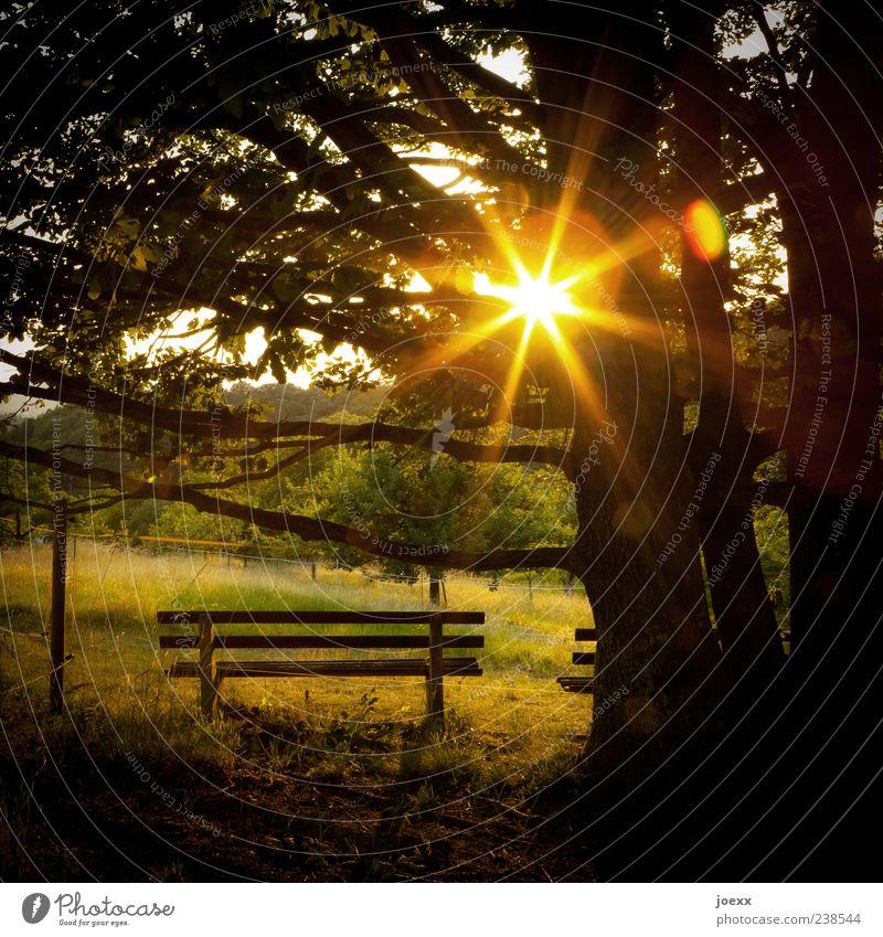 Sonnenbank Natur grün Baum Sommer ruhig Wiese Wärme Stimmung gold Hoffnung Idylle Bank Schönes Wetter Sonnenaufgang Sonnenstrahlen Gegenlicht