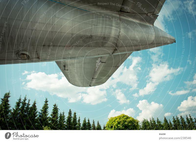 Alu-Star Luftverkehr Umwelt Himmel Wolken Wetter Schönes Wetter Baum Flugzeug Propellerflugzeug Metall fliegen alt retro Spitze Nostalgie Nadelbaum Blech