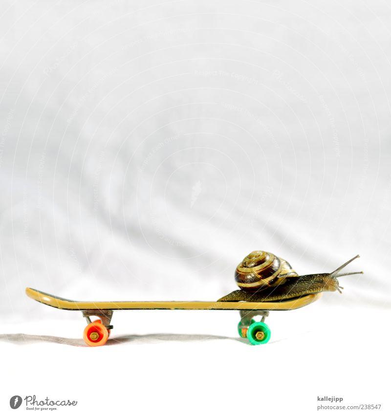 schneckentempo Freude Tier Sport Bewegung Zeit Freizeit & Hobby Wildtier Geschwindigkeit Lifestyle Coolness Idee Skateboarding Schnecke krabbeln rollen