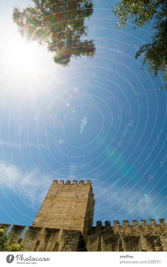 Sonnenschutz Baum Sonne Sommer Wand Wärme Architektur Mauer Schönes Wetter Schutz Burg oder Schloss Baumkrone Ruine Sehenswürdigkeit blenden Blauer Himmel Portugal