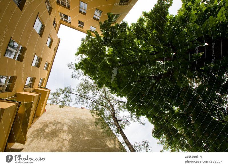 Hinterhof mit Baum grün Stadt Baum Haus Fenster Wand Berlin Architektur Mauer Gebäude Fassade Häusliches Leben Perspektive Bauwerk eng Baumkrone