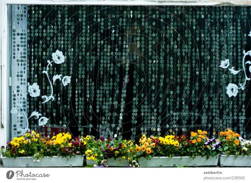 Schaufenster Lifestyle Häusliches Leben Wohnung Stadtzentrum Haus Fenster schön wallroth Blumentopf Blumenkasten Gardine Dekoration & Verzierung Vorhang Pflanze