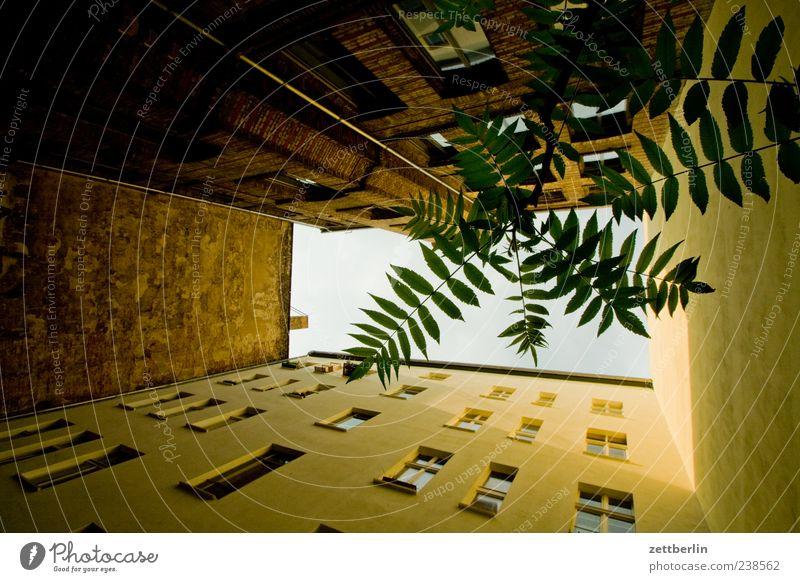 Hinterhof mit Baum Stadt Pflanze Blatt Haus Fenster Wand Berlin Mauer Gebäude Fassade Häusliches Leben Perspektive Zweig Stadtzentrum Hauptstadt