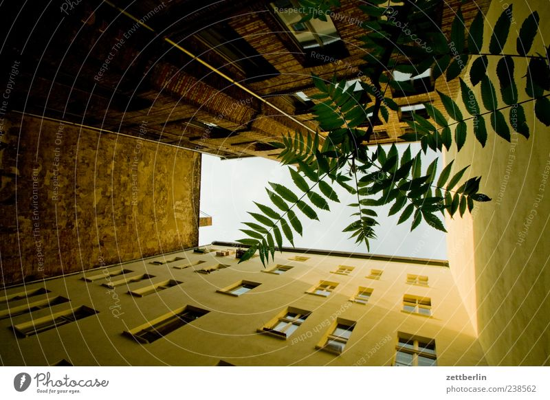 Hinterhof mit Baum Stadt Pflanze Blatt Haus Fenster Wand Berlin Mauer Gebäude Fassade Häusliches Leben Perspektive Zweig Stadtzentrum Hauptstadt Hinterhof