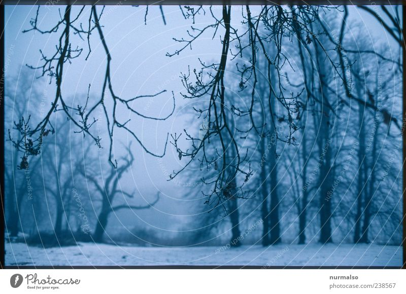 echt Trist III Umwelt Natur Landschaft Pflanze Tier Klima Klimawandel schlechtes Wetter Nebel Eis Frost Schnee Baum Park Wald genießen ästhetisch dunkel einfach