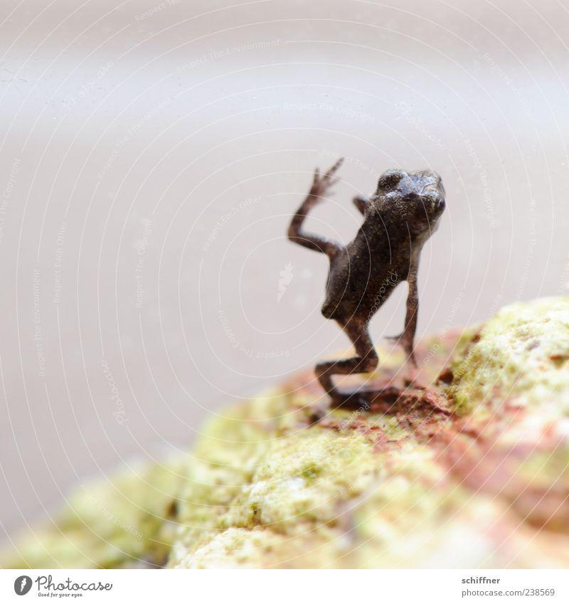Frobotu Tier Frosch Pfote 1 Tierjunges klein gelenkig winzig lustig Akrobatik Nahaufnahme Makroaufnahme Menschenleer Textfreiraum links Textfreiraum oben