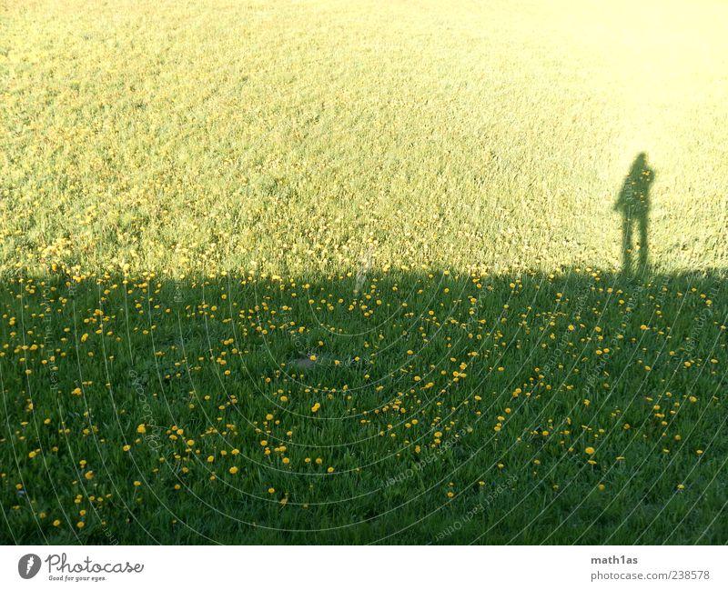 Die Dunkle Seite der Macht Mensch Natur Pflanze Sommer Blume Wiese Zufriedenheit Weide Löwenzahn Trennung Schattenseite