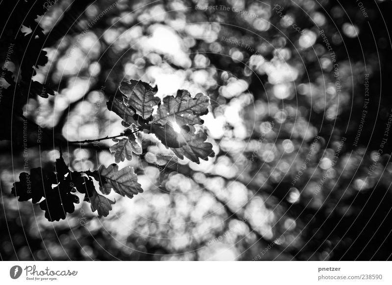 Bokehlove Umwelt Natur Landschaft Pflanze Sommer Herbst Klima Klimawandel Wetter Schönes Wetter Baum Blatt Grünpflanze Wald Urwald hell Gefühle Stimmung Freude