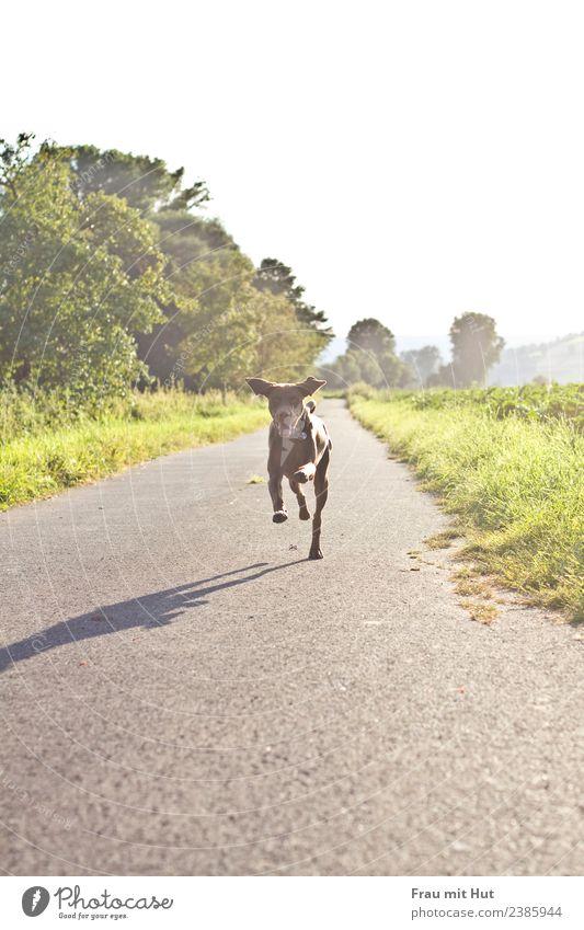 Flitzeflink Freude Glück Freizeit & Hobby Spielen Ausflug Sonne Sport wandern Natur Landschaft Wolkenloser Himmel Sonnenlicht Schönes Wetter Baum Gras Sträucher