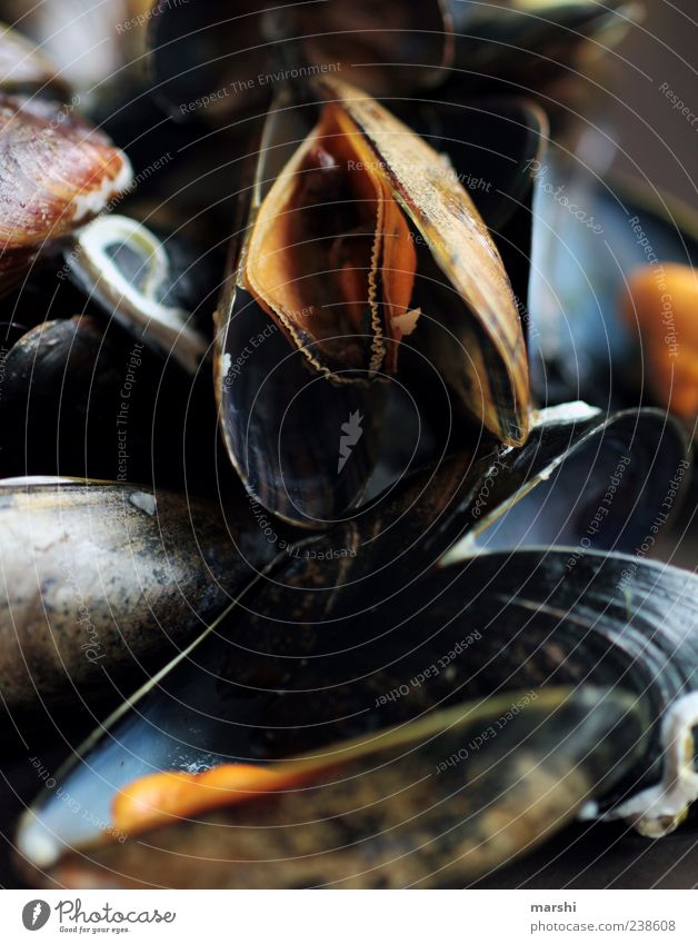 Miesmuscheln schwarz Lebensmittel mehrere Muschel Meeresfrüchte Meerestier Miesmuschel