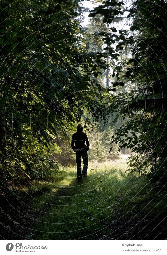 nachdenken II ruhig Spaziergang maskulin Mann Erwachsene 1 Mensch Natur Sommer Schönes Wetter Wald Fußweg gehen natürlich grün Einsamkeit Wege & Pfade Zeit