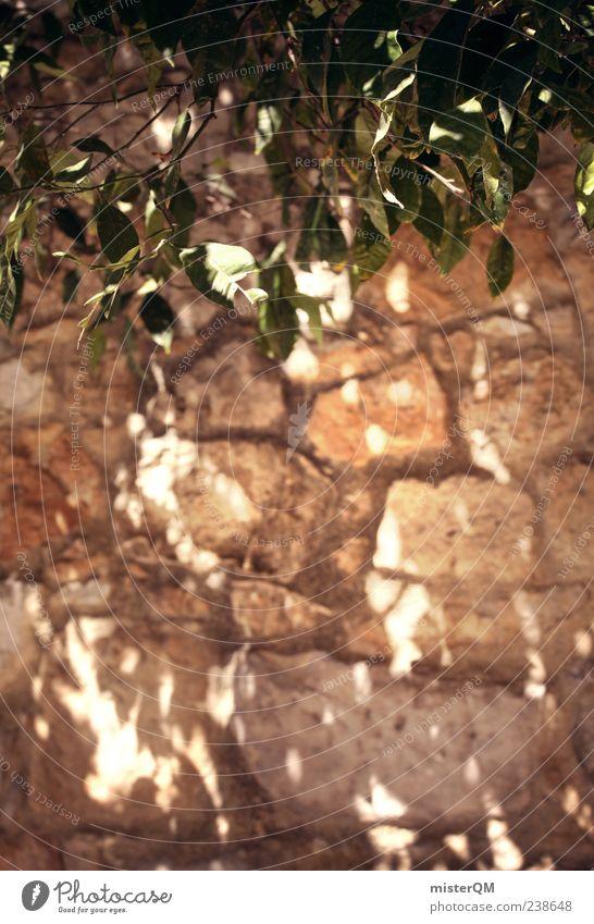 Lichterspiel. Umwelt Pflanze ästhetisch mediterran Mauer Mauerpflanze Mauerstein Lichterscheinung Lichtspiel Lichtbrechung Lichtschein Lichteinfall Schatten