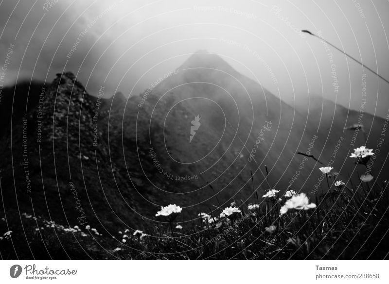 Wild Charms Berge u. Gebirge Hügel Wetter schlechtes Wetter Unwetter Nebel Pflanze Blume Gras Alpen Gipfel alt ästhetisch kalt Schwarzweißfoto Außenaufnahme