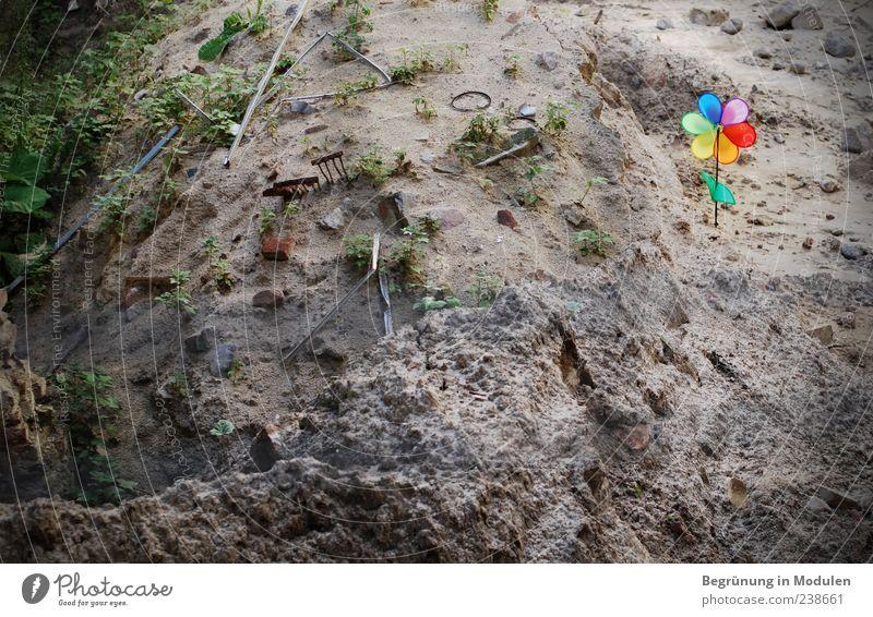 trist vs. farbenfroh Pflanze Blume Farbe hell Erde dreckig Boden Kunststoff Hinterhof Windrad künstlich karg