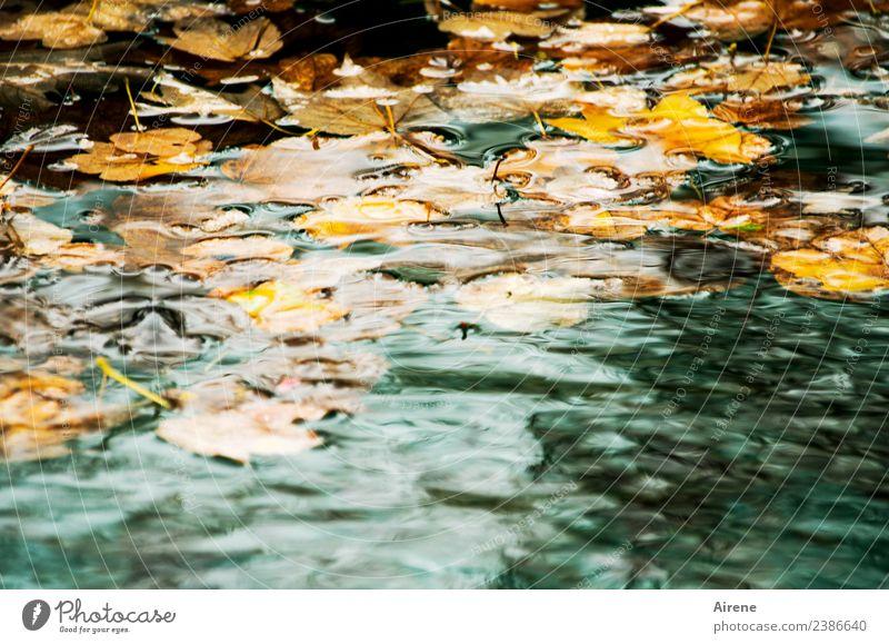 Allgäu im Herbst oder Herbst im Allgäu Natur Wasser Wetter Blatt Herbstlaub Lindenblatt Teich Schwimmen & Baden natürlich trist braun gold orange türkis Trauer